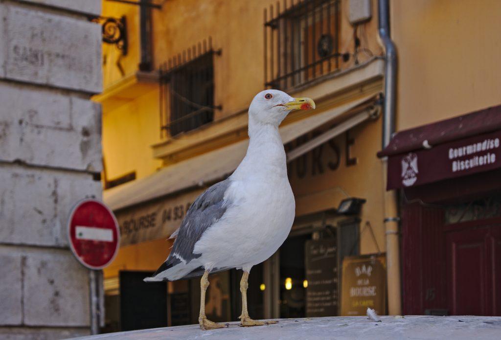 Grundlagen der Fotografie Möve in Nizza