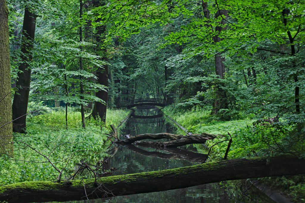 Tierpark Berlin Erfahrungen Bachlauf