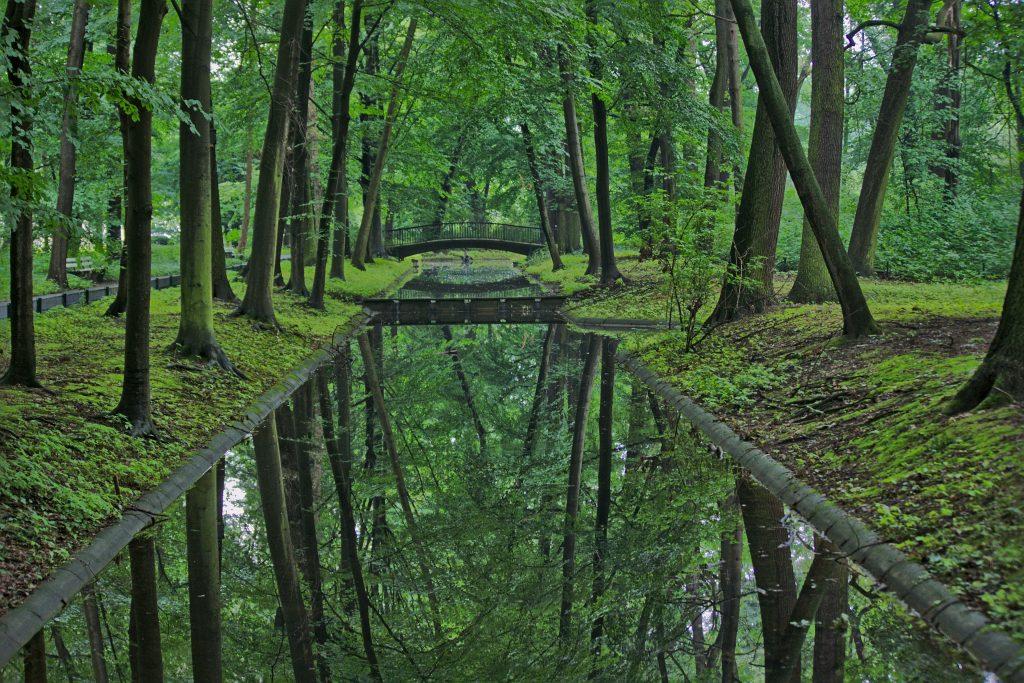 Spiegelung Wald im Tierpark Berlin