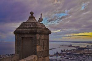 Aussicht von der Burg in Alicante mit Möve Fotoparade 2017