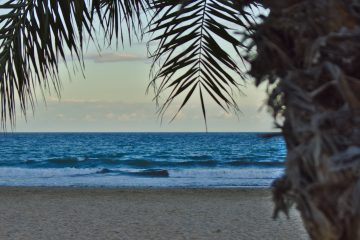 Weihnachten in alicante Palmen am Strand