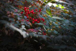 Terra Natura Benidorm Winter in alicante
