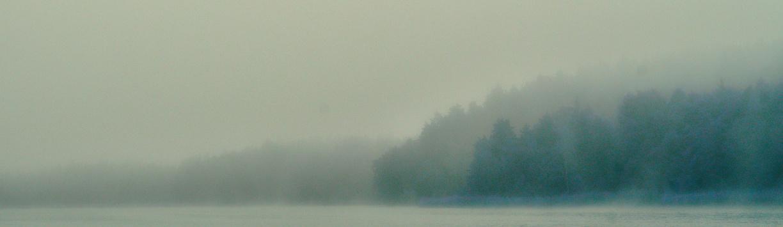 Wald im Nebel, Norwegen Bildqualität