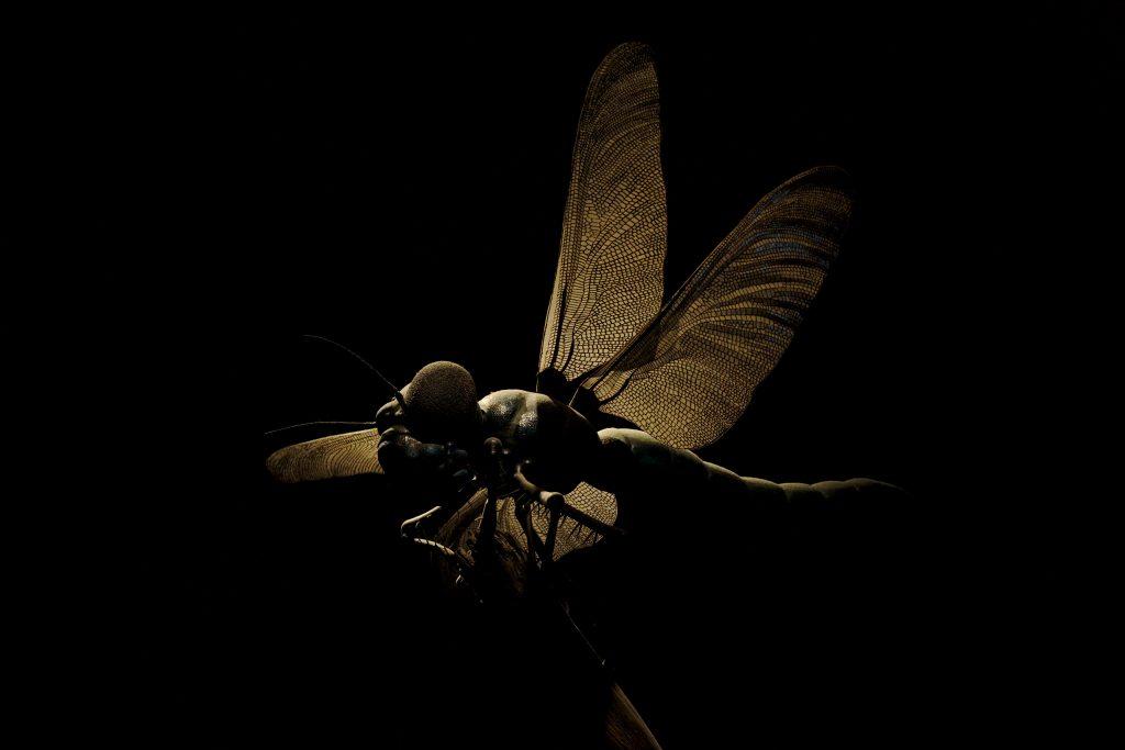 Keller Insektenmodelle Naturkundemuseum Berlin