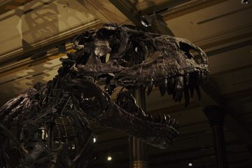 Naturkundemuseum Berlin T-Rex Tristan
