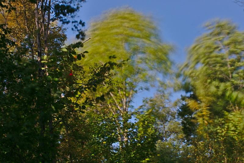 Bäume im Wind Langzeitbelichtung