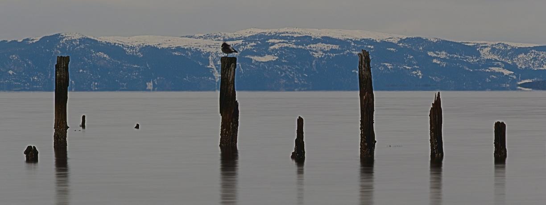 Blick über den Trondheimfjord Panoramafotografie