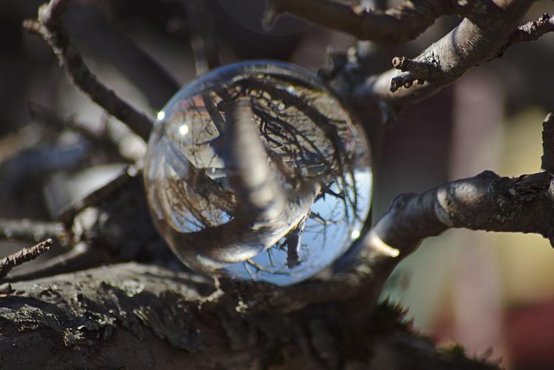Glaskugel im Apfelbaum