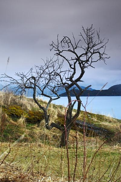 Baum am Trondheimfjord