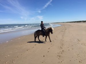 Pferd am strand von tversted