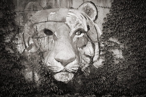 Tiger Deko an der Wand Tierpark kolmården