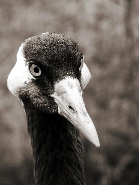Portrait eines Vogels