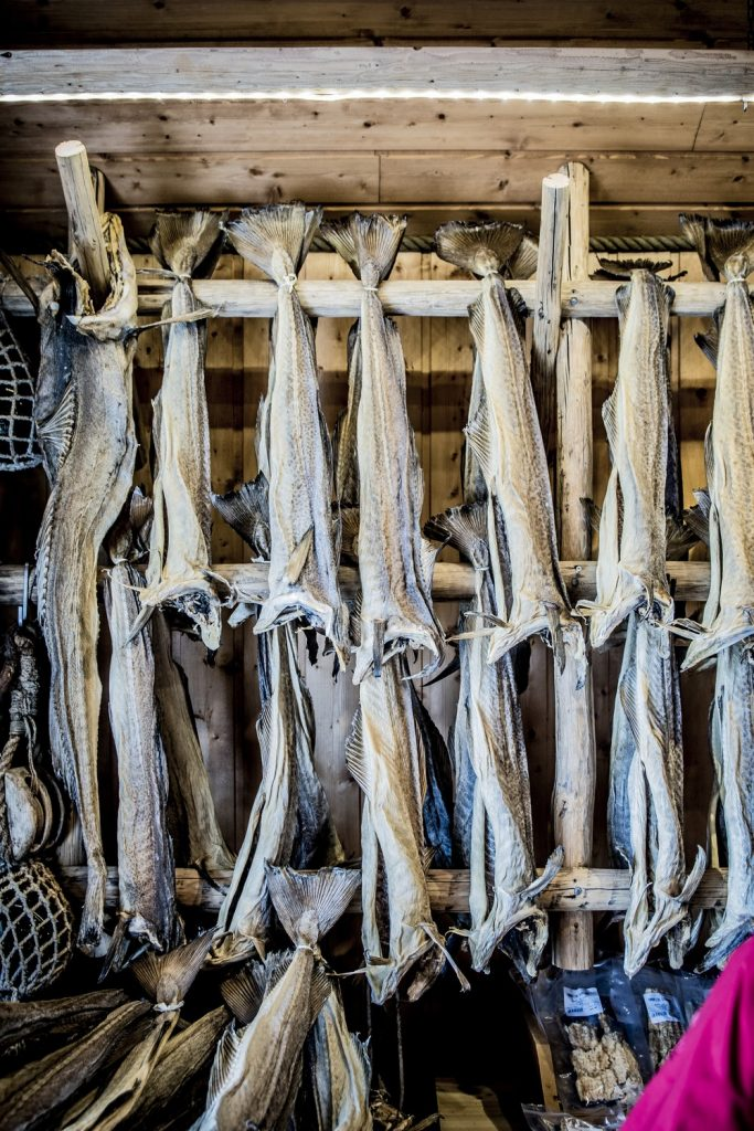 Trockenfisch auf Stativ Lofoten, norwegische Küche