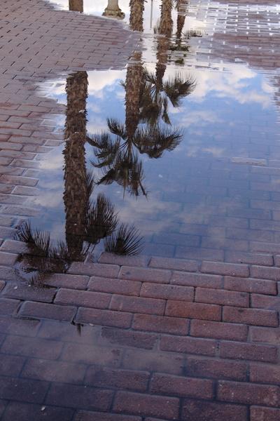 Palmen spiegeln sich in einer Pfütze