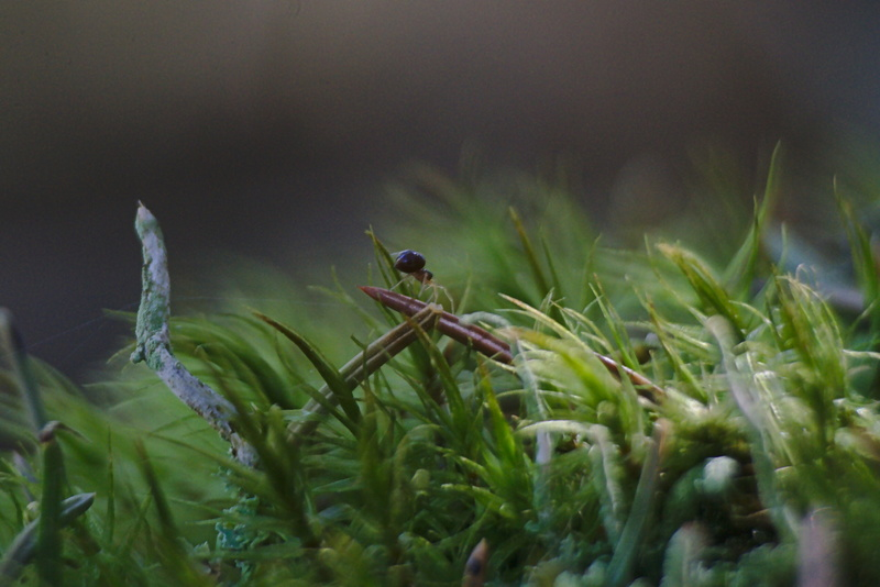 Kleine Spinne auf einem Waldboden