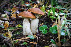Pilze im Wald nordische momente