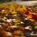 Herbstlaub Herbstfotos Stjørdal Norwegen
