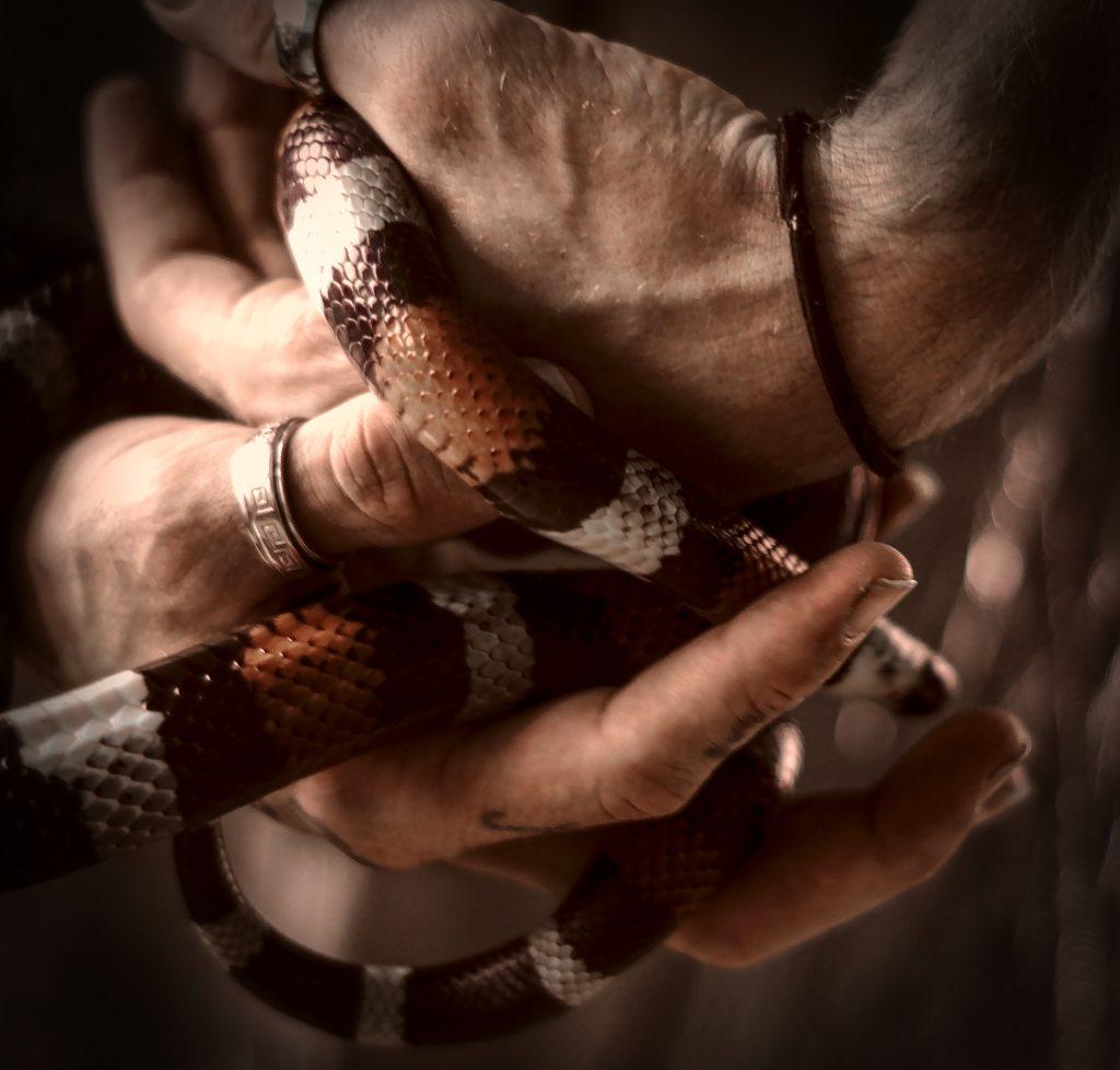 Schlangenshooting bearbeitet mit darktable