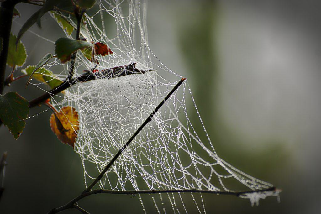 Spinnennetz im Herbst Herbstfoto