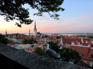 Tallinn Möwe Altstadt
