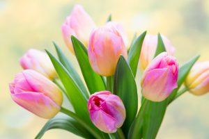 Tulpenstrauss kurioses aus Russland