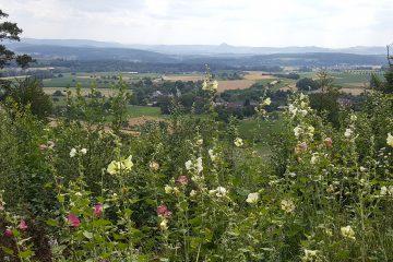 zurück nach Deutschland Blick auf den Hegau