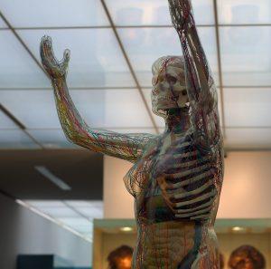 gläserne Frau Hygiene Museum Dresden