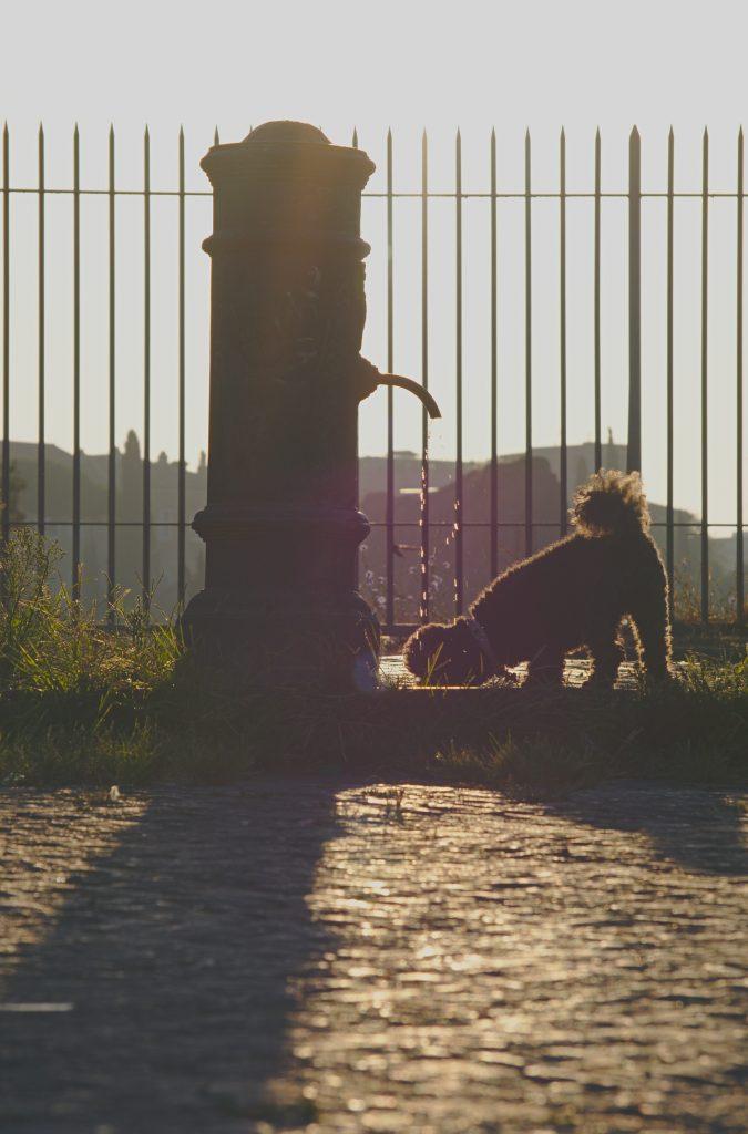Trinkbrunnen mit Hund