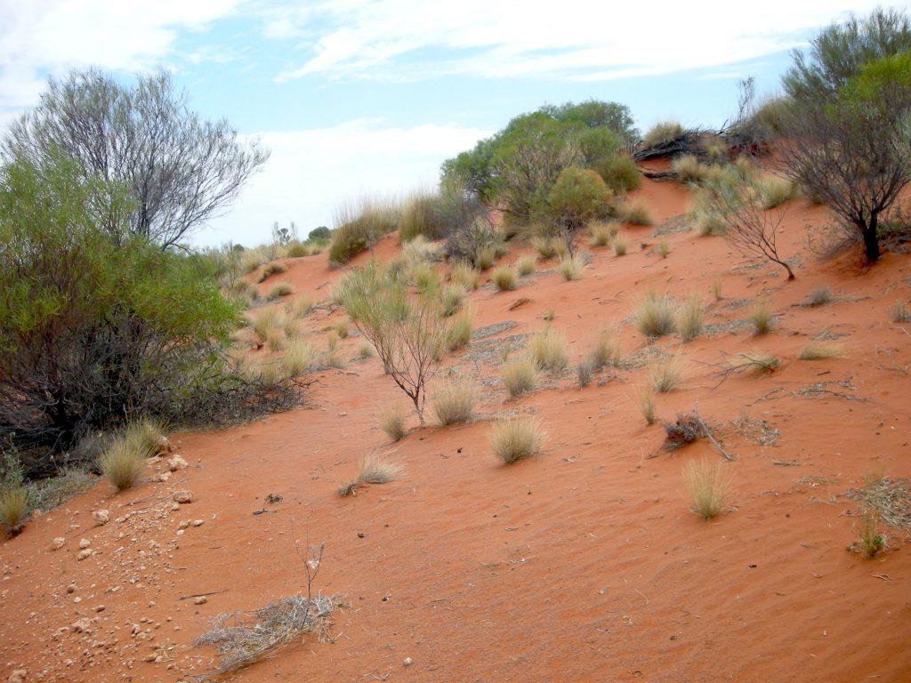 Mit the ghan durch australien karge landschaften