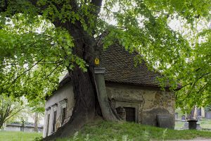 Moller linde sage Nikolaifriedhof Görlitz