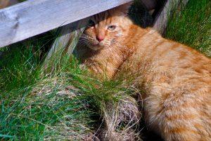 rote Katze garfield Polen Drawa pestkownica Residenz pustnik