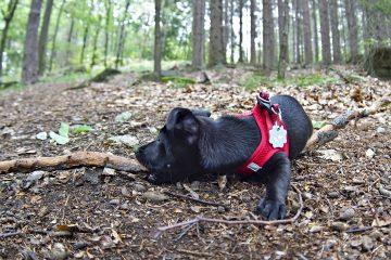 Susi the Wuff im Wald ast