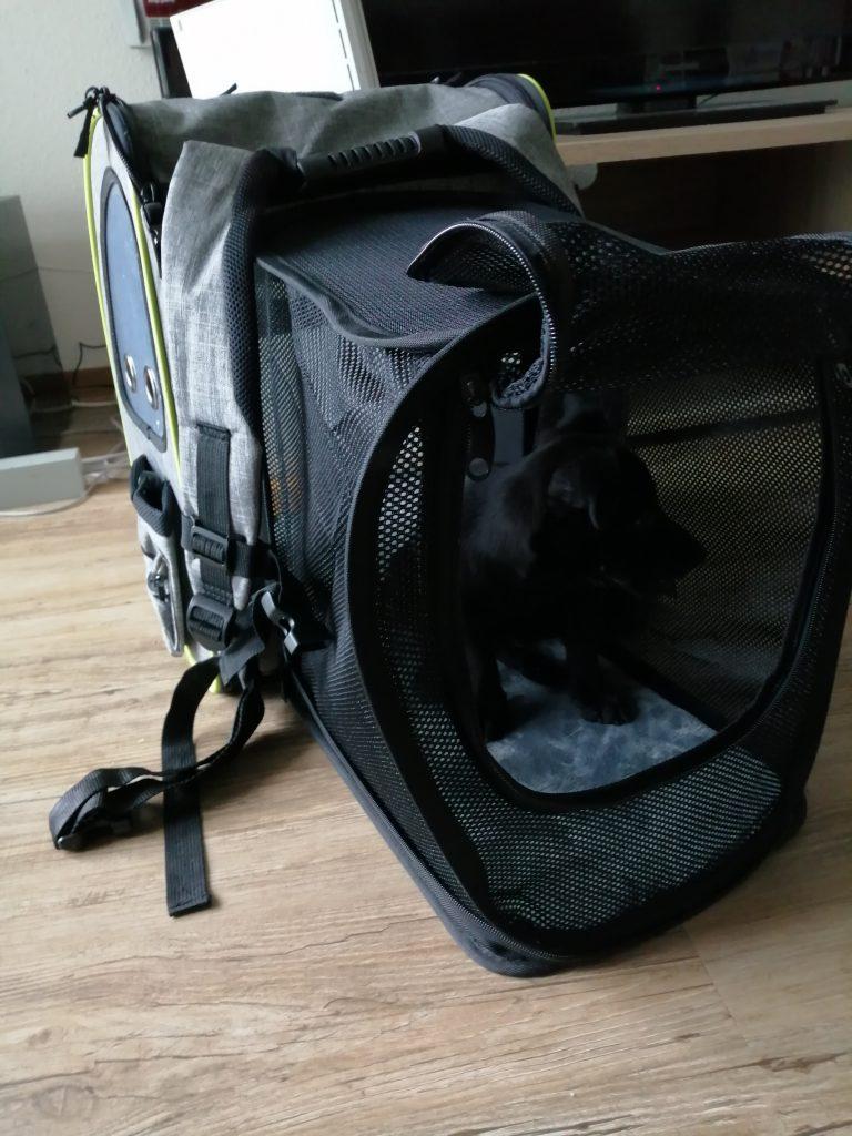 Reiserucksack Hund mit Expansion auf den Hund gekommen