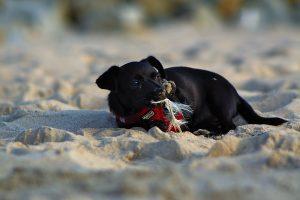 Hund amStrand Ustronie Morskie Polen