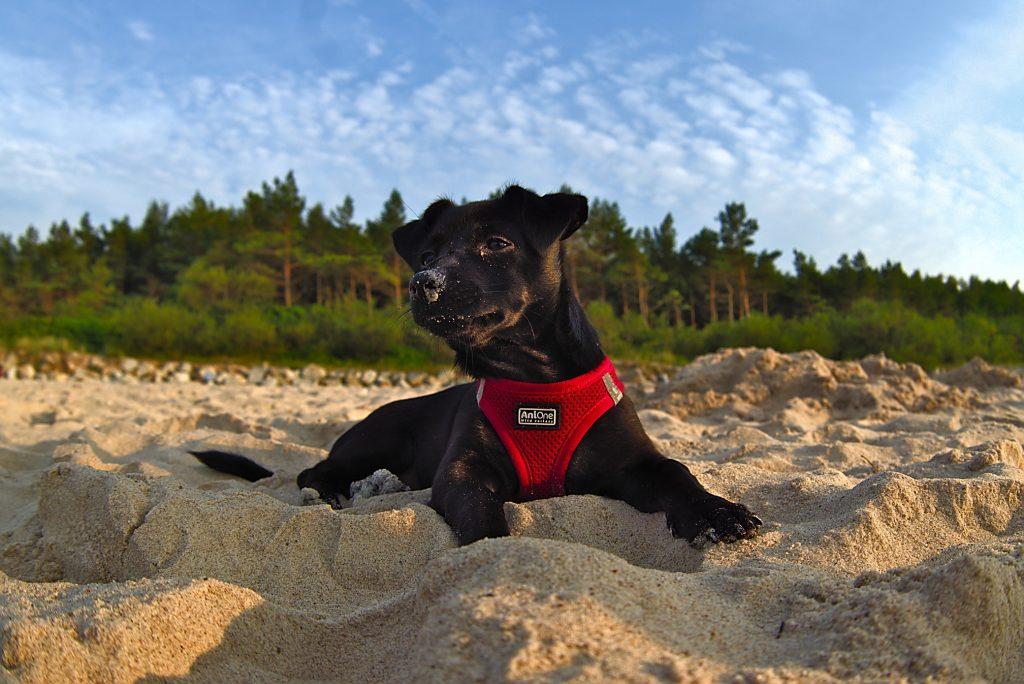 Hund am Strand Ostsee Interrrail durch Polen