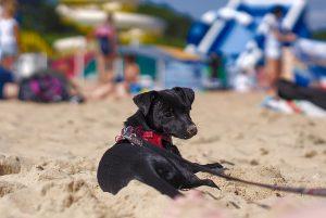 Hund am Strand Gdansk