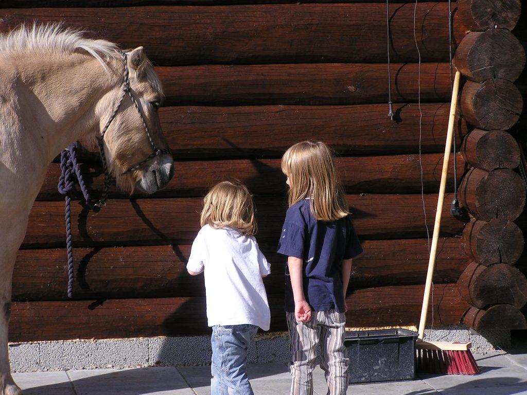 Pferd Vidarasen landsby camphill auswandern nach norwegen