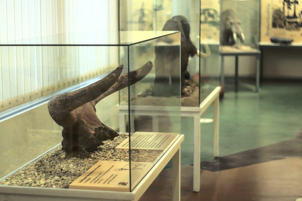 Geologie ausstellung Naturkundemuseum Görlitz
