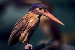 Vogel Regenwald Naturkundemuseum Görlitz