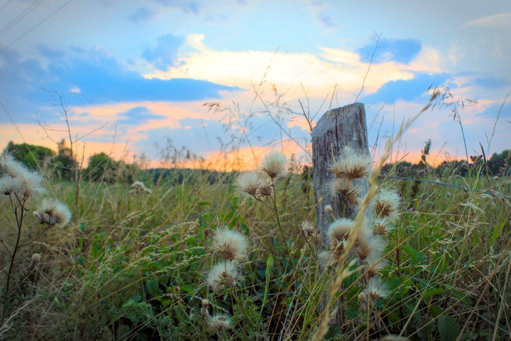Uckermark, Landschaft, Wiese,Natur