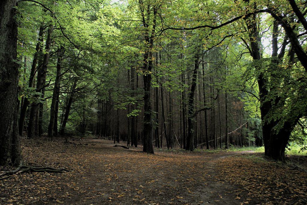 Weltnaturerbe Buchenwald Grumsin Uckermark Brandenburg