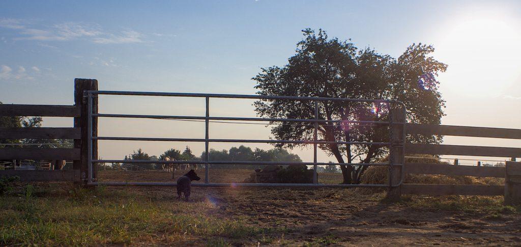 Uckermark, liesjeTrecking, Hund bei Pferdekoppel