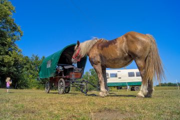 Pferd und Planwagen,liesje Trecking