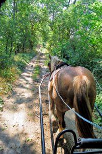 Pferd vorKutsche Waldweg Uckermark, Tagestour mit Planwagen
