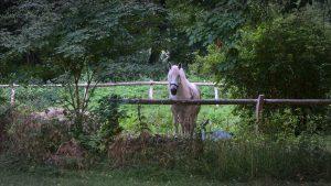 Pferd auf Koppel Wasserburg gerswalde