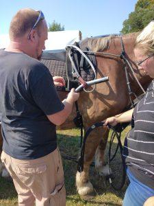 Planwagen, Pferd anspannen, Mann beim einspannen