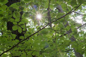 # Jahre mit kindimrucksack Wald